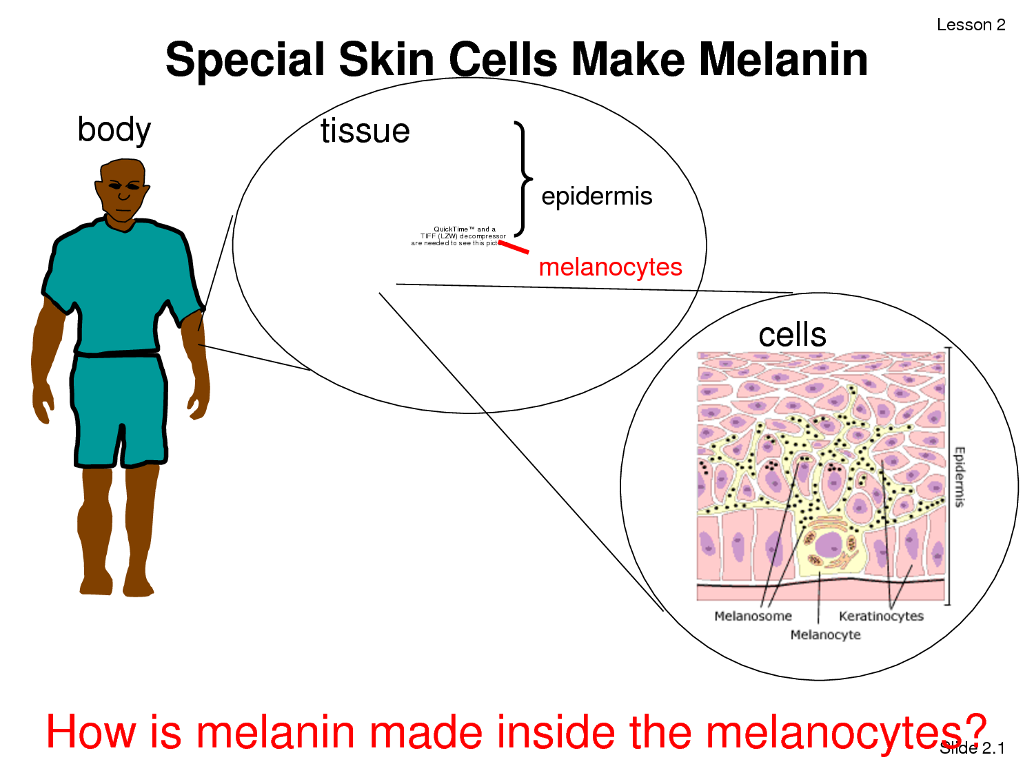 How Melanin is made