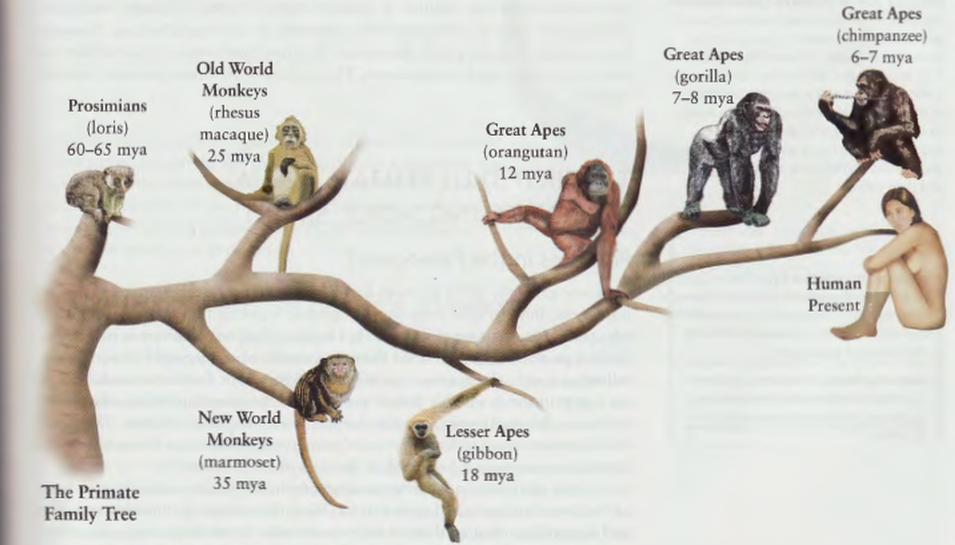 essay on evolution of man Free human evolution papers, essays, and research papers.
